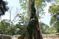 tree tombraider